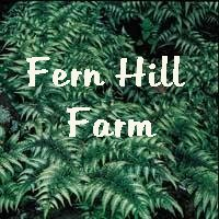 Return to Fern Hill Home Page